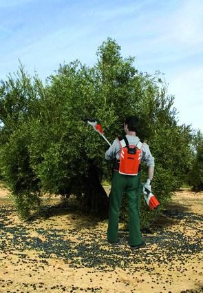 Batolladors per collir olives